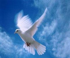 20100922023633-paloma-blanca.jpg