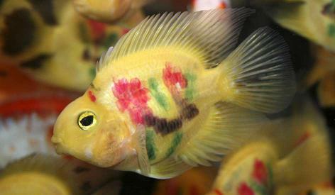 20110320222744-peces-tatuados.jpg