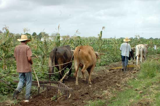 20120911151200-agricultura-boyeros-abg-02.jpg