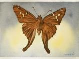 Las mariposas de  Antonio Guerrero